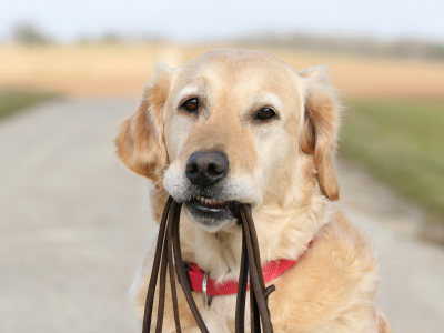 Tips for Effective Dog Obedience Training