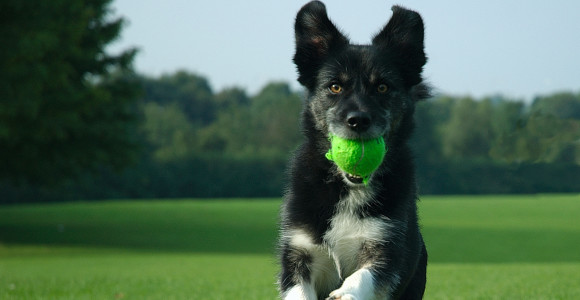 Common Sense Dog Training Tips That Work Incredibly Fast